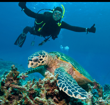A scuba diver posing with a turtle in the Great Barrier Reef